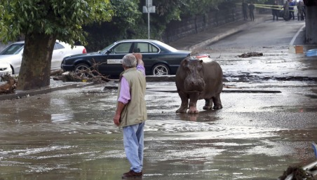 Géorgie inondation zoo