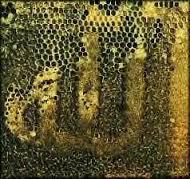 Quand les abeilles...